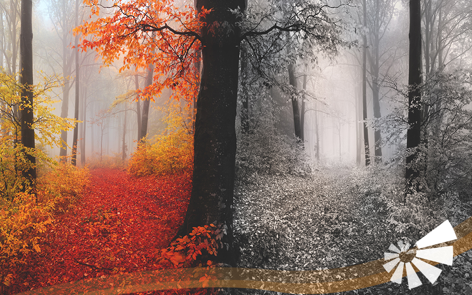 Wald bunt und schwarz/weiß